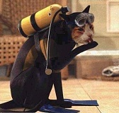 Funny Cat Pictures -  in SCUBA gear.