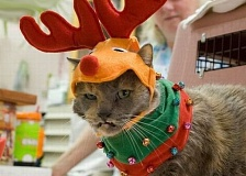 A funny picture of a cat dressed like a reindeer