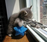 Funny Cat Pictures -  with Rifle