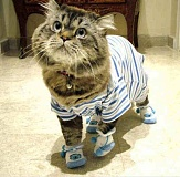 Funny Cat Pictures -  in Pajamas and Slippers