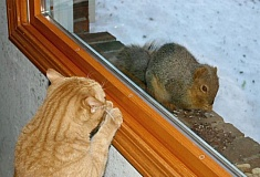 Funny Pictures of Cat Staring at Squirrel Through Window