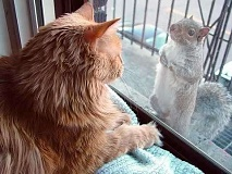 Funny Cat Pictures -  and Squirrel Staring at Each Other