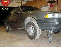 Funny Pictures of Kitten Lifting Car in Garage