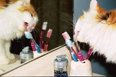 Funny Cat Pictures -  Licking Tooth Brushes