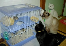 Funny Cat Pictures - s Watching Gerbil