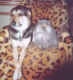 Funny Pictures of Dog With Cat With Glowing Eyes