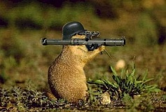 A funny groundhog day picture.