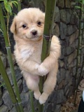Funny Pictures of Dog Clinging To Bamboo