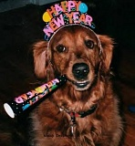 Funny Pictures of Happy New Year Dog