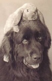 Funny Pictures of Dog With Rabbit On Head