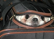 Funny Pictures of Dog Hiding in Luggage