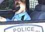 Funny Pictures of A Dog Driving a K9 Police Car