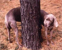 Funny Pictures of Long Dog Wrapped Around Tree