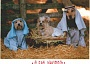 Funny Pictures of Dogs in Manger Scene