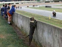 Funny Pictures of Dog Watching Races at Track