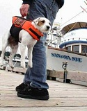 Funny Pictures of Dog With Life Jacket On