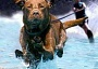 Funny Pictures of Dog Pulling Water Skier