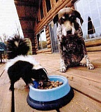 Funny Jokes Pictures of Skunk Eating Dog Food