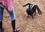 Funny Pictures of Dog with Spider Legs