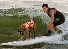 Funny Jokes Picture of Dog on Surfboard