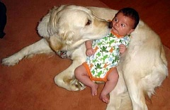 Funny Pictures of Dog Surprising Baby