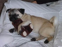 Funny Pictures of Dog Sleeping With Teddy Bear