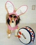 unny Jokes Pictures of Dog Dressed up like the Energizer Bunny