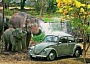 A funny Elephant Pictures of an Elephant spraying a volkswagen bug.