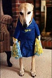 Funny Picture of Cheerleader Dog